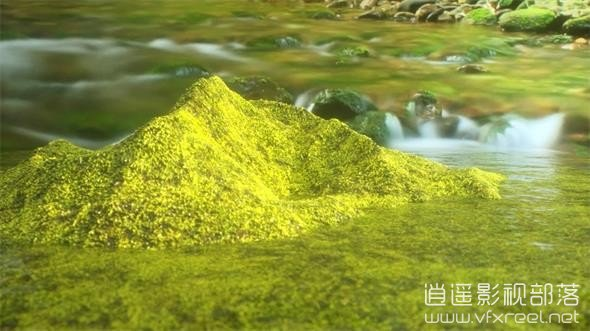 C4D教程:OC渲染器苔藓材质教程 Creating Moss with Octane Render and Displacement