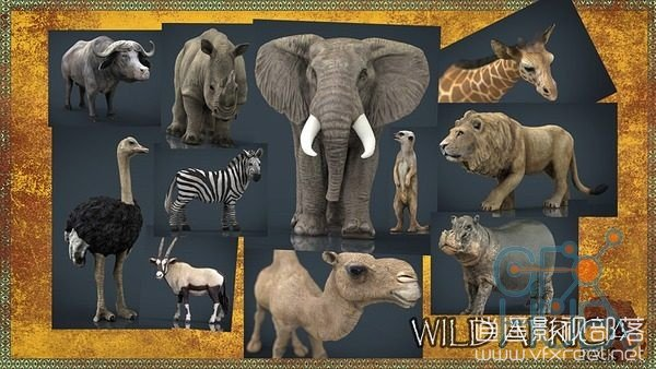 Cubebrush-–-WILD-AFRICA-PACK 模型材质:非洲野生动物3D模型包 Cubebrush – WILD AFRICA PACK