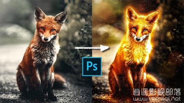 Golden-Glowy-Fox-Effect-in-Photoshop-Made-using-XP-PEN-Artist-Display-15.6-Pro PS制作黄金发光狐狸特效合成教程 Golden Glowy Fox Effect in Photoshop